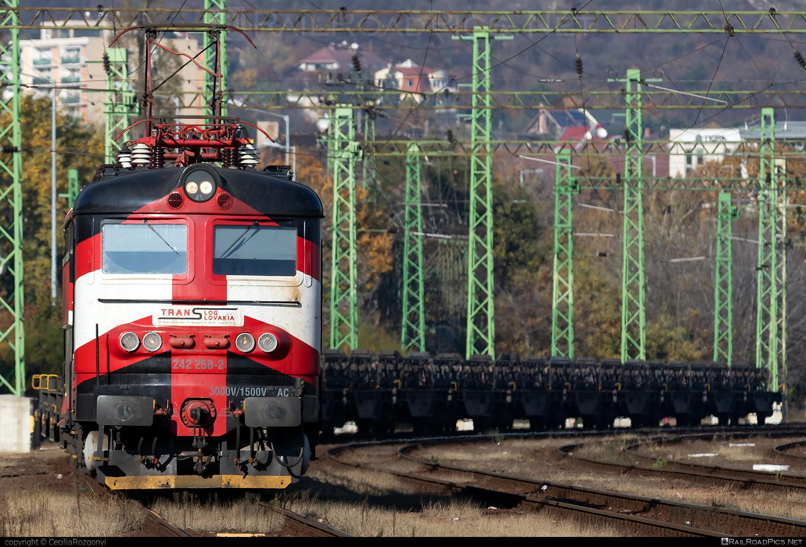 Škoda 73E - 242 258-2 operated by PETROLSPED Slovakia s.r.o. #flatwagon #locomotive242 #plechac #skoda #skoda73e #tlssk #translog #translogslovakia